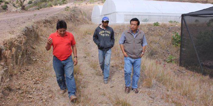 Incentivan el cultivo del aguacate en la Mixteca