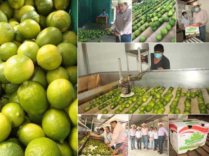 Entrega SEDAPA 11.5 mdp a productores de la Cuenca del Papaloapan