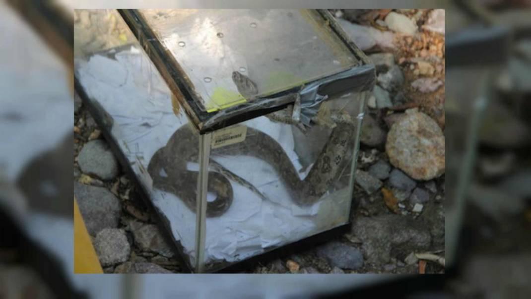 Rescatan 18 especies amenazadas, entre ellas un cocodrilo, una boa y varias tortugas en Cuilapam