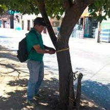Se realiza en Santa Lucía del Camino primer inventario de arbolado urbano