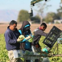 Alcaldías mexicanas reúnen dinero para costear la defensa de migrantes