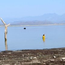 Productores agrícolas del Istmo, al borde del colapso por sequía