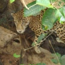 Ceiba Jaguar insistirá durante el 2017 en la conservación ambiental de los municipios