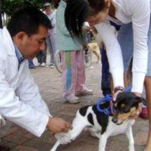 Del 27 de marzo al primero de abril  será la campaña de vacunación canina y felina