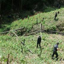 SEIS MIL METROS CUADRADOS DE AMAPOLA SON DESTRUIDOS EN LA SIERRA NORTE: SSPO