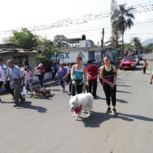 Aumenta maltrato a perros: activista