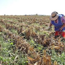 Abandonado, más del 50% del campo en Oaxaca
