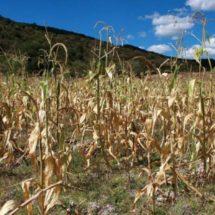 Ganaderos urgen a perforar de pozos en el Istmo para paliar sequía