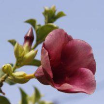 Alertan sobre extinción de flora istmeña; crean jardín etnobotánico en Lieza, Oaxaca