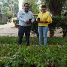 Reforestar para heredar un mejor Tuxtepec a futuras generaciones: Anilú Delfín
