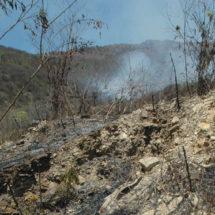 Alarma por acelerada deforestación en Oaxaca