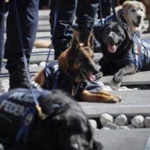 Se suman 33 perros a las labores de la PGR