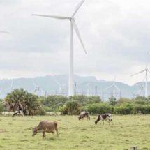 Cancelan renta de tierras a Mitsubishi en el Istmo