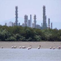 Tardarán años en resarcir los daños ambientales a manglares en el Istmo