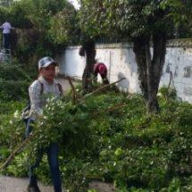 Parques y jardines hace recorte de árboles para evitar  que en tiempo de lluvias por su peso se caigan
