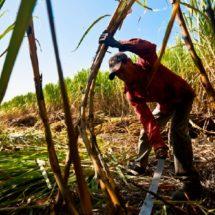 Ingenio azucarero poco a poco se encuentra liquidando a productores