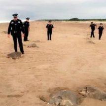 Vigila PF desove de tortugas en Oaxaca