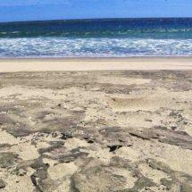 Contaminación de refinería mata el santuario tortuguero de Concepción Bamba, Oaxaca