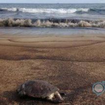 Nuevo derrame de crudo en Salina Cruz amenaza playas de Huatulco