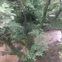 Dragan el río Paraíso y está por desaparecer