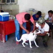 Implementan campaña de vacunación antirrábica en Xoxocotlán