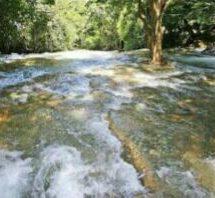 'Agoniza' manantial; afecta a 3 municipios