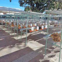 Venden en internet gallinas de Sagarpa en Juchitán, Oaxaca