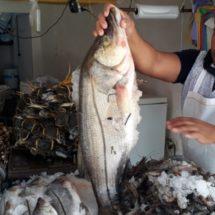 Disminuye venta de pescados y mariscos esta cuaresma