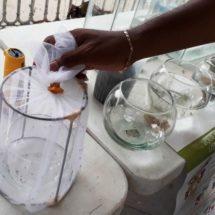 Vectores investigan el comportamiento del mosco transmisor Aedes Aegypti