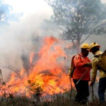 Incendios forestales ponen a Oaxaca a la cabeza nacional por superficie forestal afectada este año
