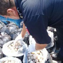 Rescatan en Oaxaca a 22 mil 800 huevos de tortuga marina que transportaban en una camioneta