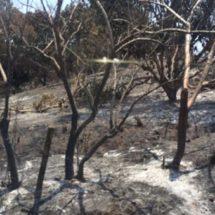 Campesinos de Pinotepa exigen a autoridades que supervisen la quema de pastizales