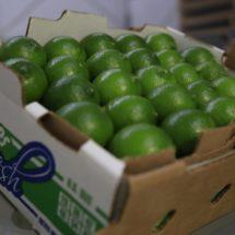 Limoneros de la región solo fueron apoyados por empresas privadas