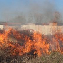 Atiende protección civil en lo que va del año 75 incendios forestales