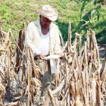 Politización, traba al desarrollo rural de Oaxaca