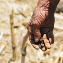 Por hambre y sed abandonan el campo en Tlapacoyan, Oaxaca