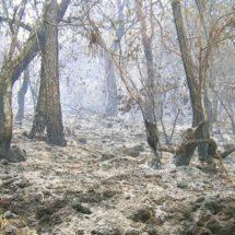 Rehabilitación de bosques quemados en Oaxaca duraría hasta un siglo