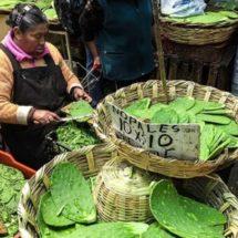 México reunirá a expertos del mundo en foro de alimentos sanos