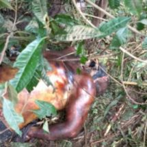 Encuentran cadáver putrefacto en límites de Veracruz y Oaxaca