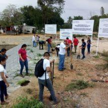 Con la reforestación se mejora el ambiente y la calidad de vida: Gobierno de Tuxtepec