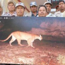 Comuneros oaxaqueños, ágiles y guardianes de felinos