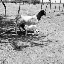 Abandonan el campo en el Istmo, Oaxaca; prefieren la albañilería