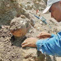 Elefante prehistórico fue descubierto en San Martín de los Cansecos, Oaxaca