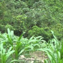 Jóvenes mixes apoyan a campesinos en mejora de cultivos y protección de suelos