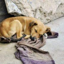 Hay en Huajuapan más de 15 mil perros callejeros: Asociación protectora