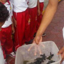 Libera tortugas la Zona Naval de Oaxaca