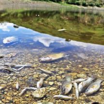 En 50 años, Oaxaca perdió el 30 por ciento de sus especies acuáticas, algunas de ellas habitaban en el río Atoyac