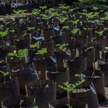 """Árboles producidos en vivero del Bosque """"El Tequio"""" coadyuvan a reforestación de 11 municipios"""
