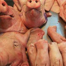 México mantiene alerta por fiebre porcina africana