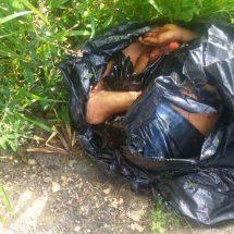 Tiran bolsas con restos humanos en Palo Gacho